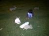 lembang-20110213-00037